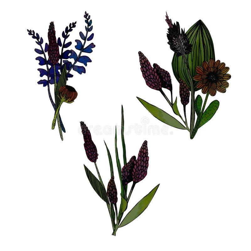 Ajuste de 3 ramalhetes das ervas da aquarela ilustração stock