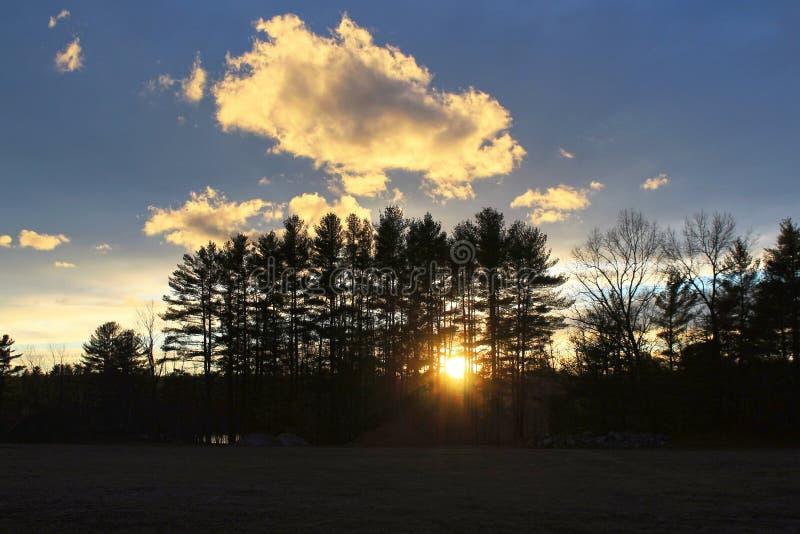 Ajuste de Sun atrás das árvores fotos de stock