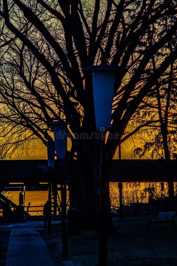 Ajuste de Sun atrás das árvores no parque imagem de stock royalty free