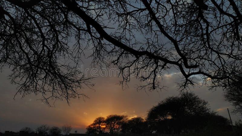 Ajuste de Sun con las ramas del árbol en marco imagen de archivo