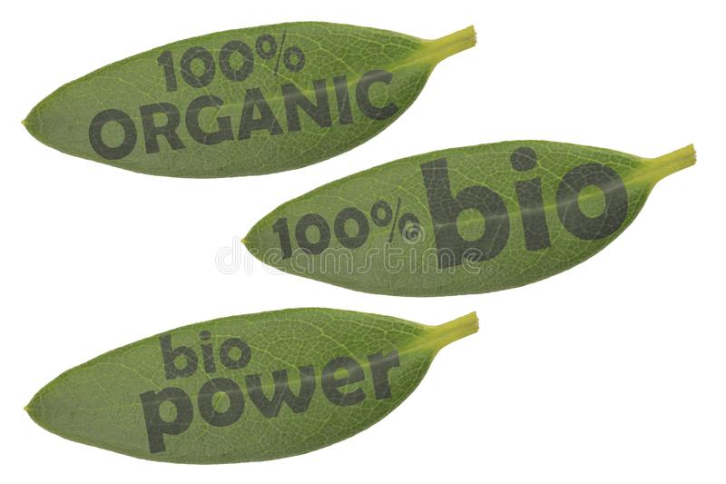 Ajuste de três folhas verdes e dos textos no roteiro escuro 100% orgânico, poder de 100% no bio e bio fotografia de stock