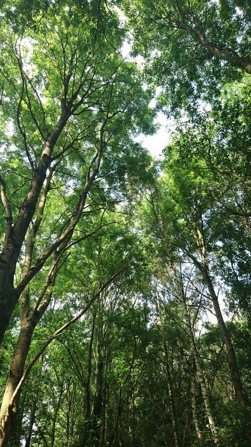 Ajuste del bosque imágenes de archivo libres de regalías