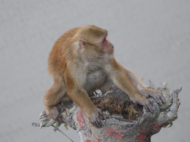 Ajuste del mono en una rama de árbol imágenes de archivo libres de regalías
