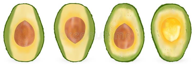 Ajuste do abacate realístico, planta de fruto sempre-verde, baga único-semeada vetor 3d ilustração royalty free