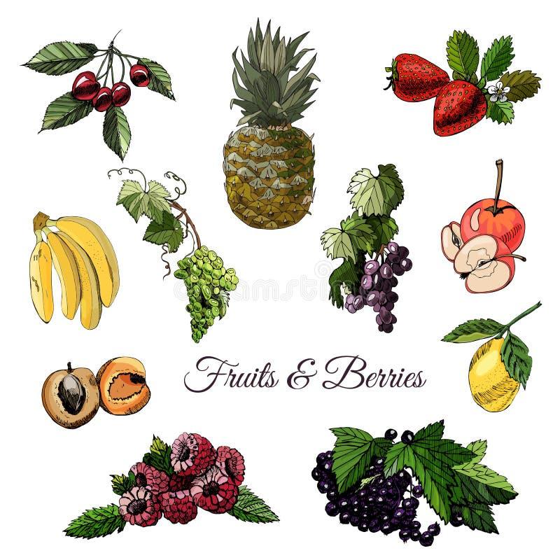 Ajuste do esboço colorido tração da mão de bagas e de frutos diferentes com as folhas isoladas no fundo branco ilustração do vetor
