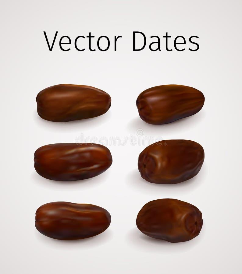 Ajuste do fruto realístico das datas do vetor ilustração do vetor