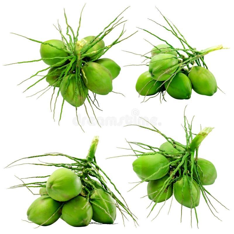 Ajuste do isolado verde do coco sobre com fotografia de stock