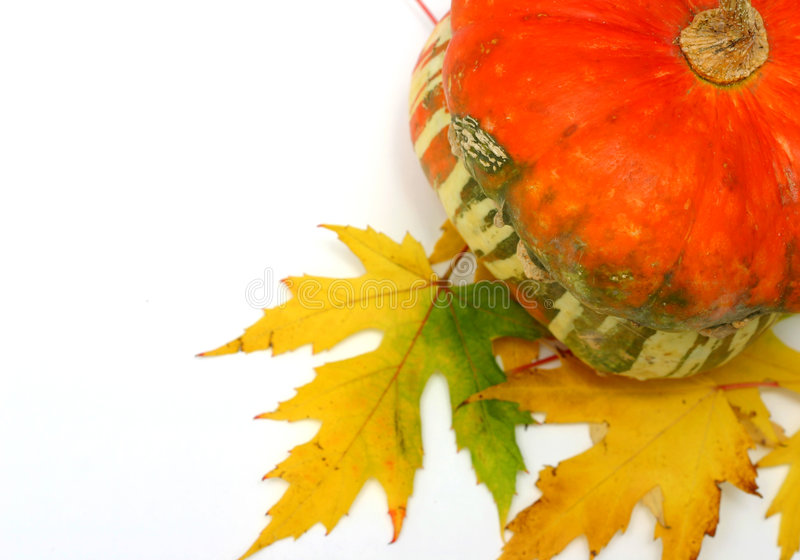 Ajuste do outono fotografia de stock