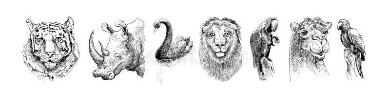 Ajuste dos animais principais do safari, desenho de esboço preto e branco ilustração royalty free