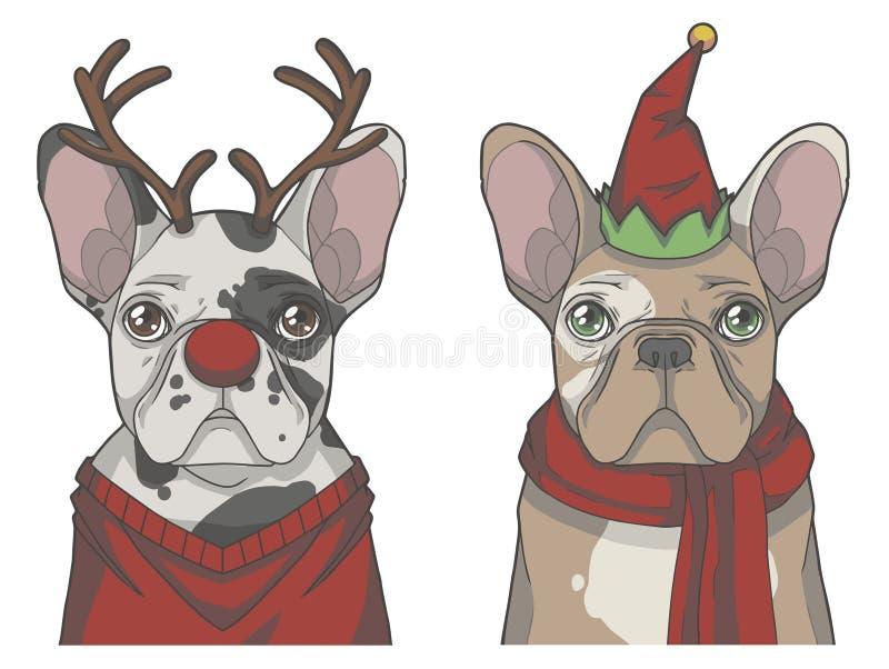 Ajuste dos cães do buldogue francês vestidos acima como da rena e do duende do Natal ilustração royalty free