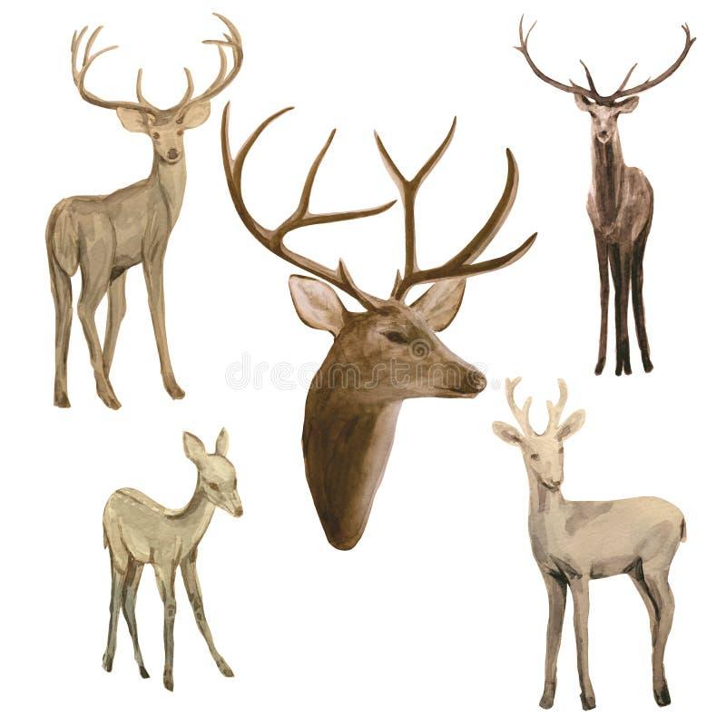 Ajuste dos cervos da aquarela em nivelar a floresta ilustração royalty free