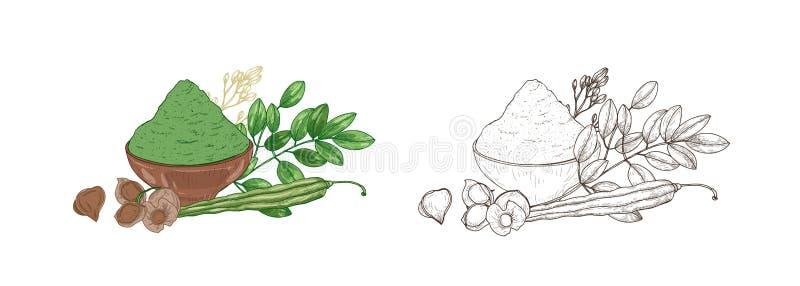 Ajuste dos desenhos coloridos e monocromáticos das vagens do planta da moringa oleifera, as vegetais e do pó na bacia Produto de  ilustração do vetor