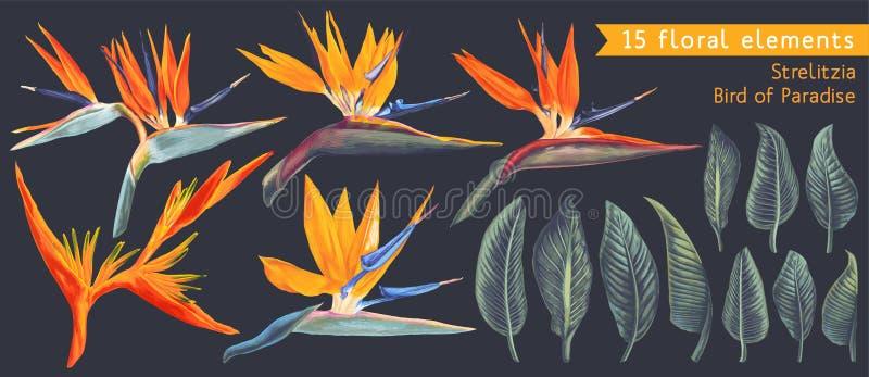 Ajuste dos elementos florais com Strelitzia Reginae, as flores tropicais e as folhas ilustração stock