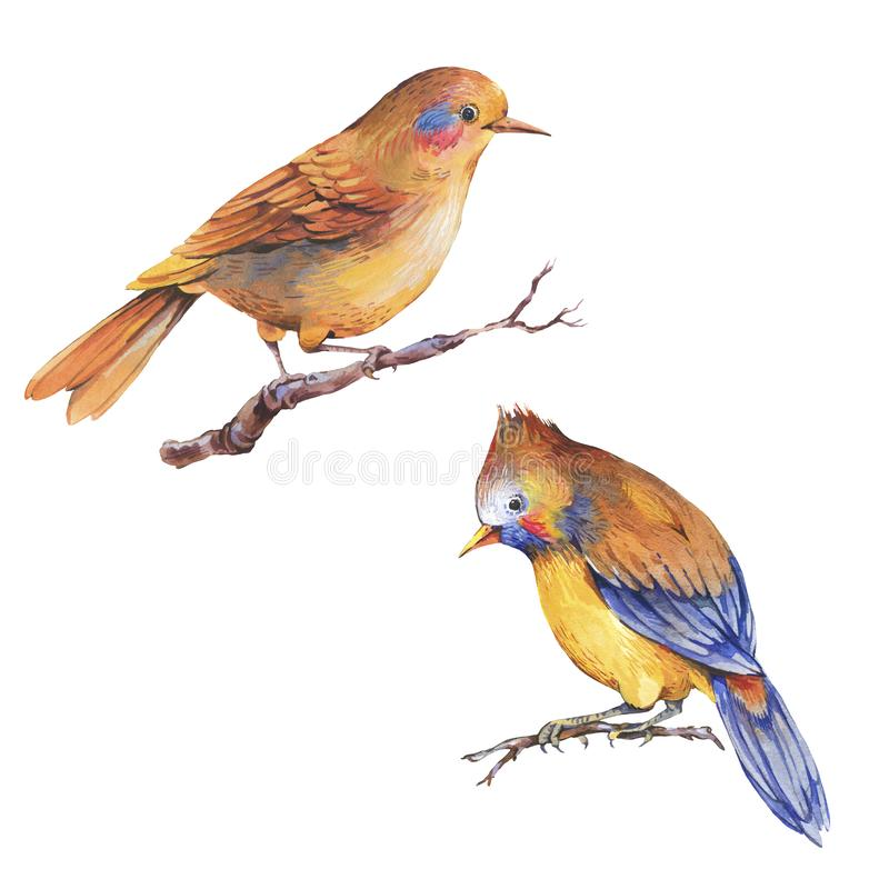 Ajuste dos pássaros coloridos da floresta da fantasia da aquarela isolados no fundo branco ilustração do vetor