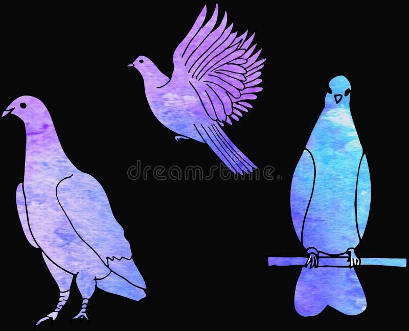 Ajuste dos pássaros do mão-desenho no fundo preto Pomba watercolor ilustração stock