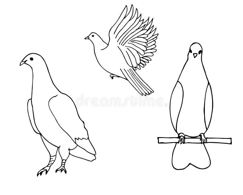 Ajuste dos pássaros do mão-desenho Pomba ilustração stock