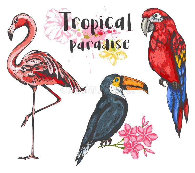 Ajuste dos pássaros tropicais tirados mão do vetor ilustração royalty free