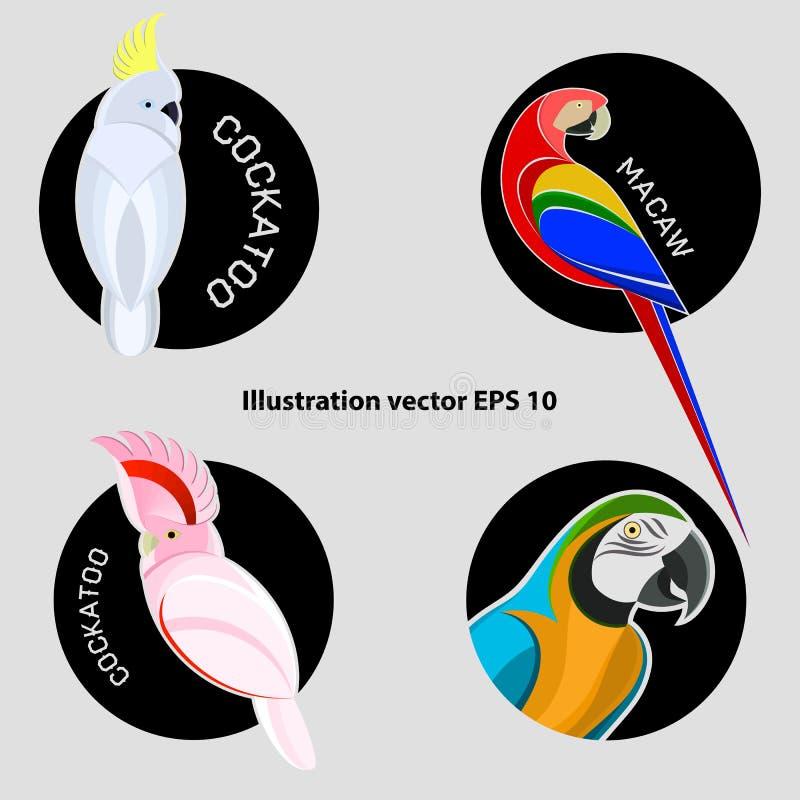 Ajuste dos papagaios abstratos brilhantemente coloridos para o logotipo ilustração stock