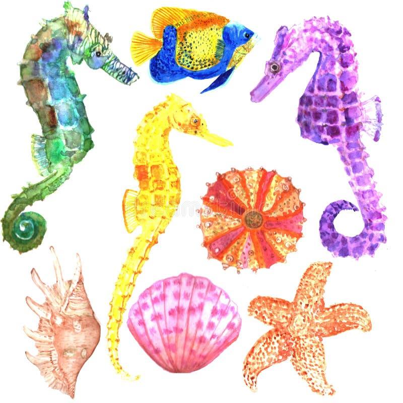 Ajuste dos peixes isolados, conchas do mar watercolor ilustração royalty free