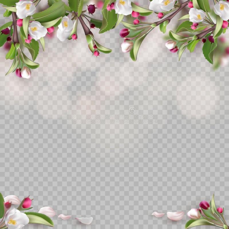 Ajuste dos ramos de florescência realísticos, árvore de maçã ilustração do vetor