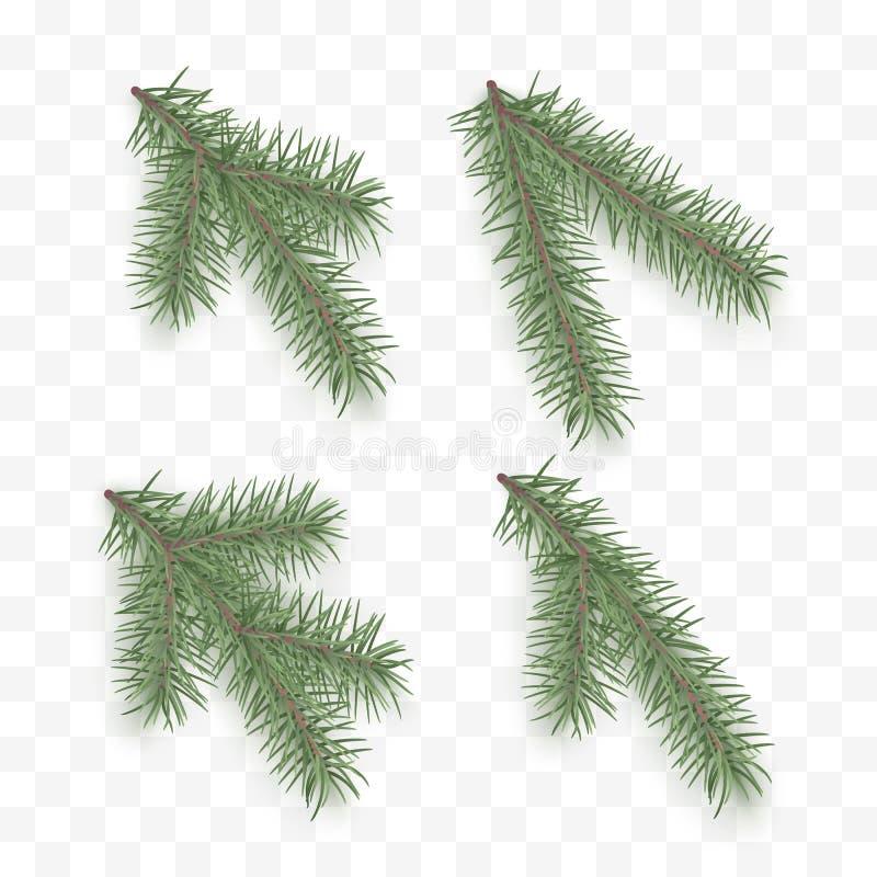 Ajuste dos ramos realísticos do abeto Elementos ornamentados do feriado Árvore ou pinho de Natal Símbolo do ramo das coníferas do ilustração royalty free