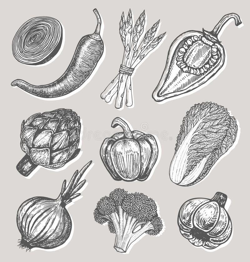 Ajuste elementos tirados mão com os legumes frescos do estilo do esboço Pimentas diferentes ilustração royalty free