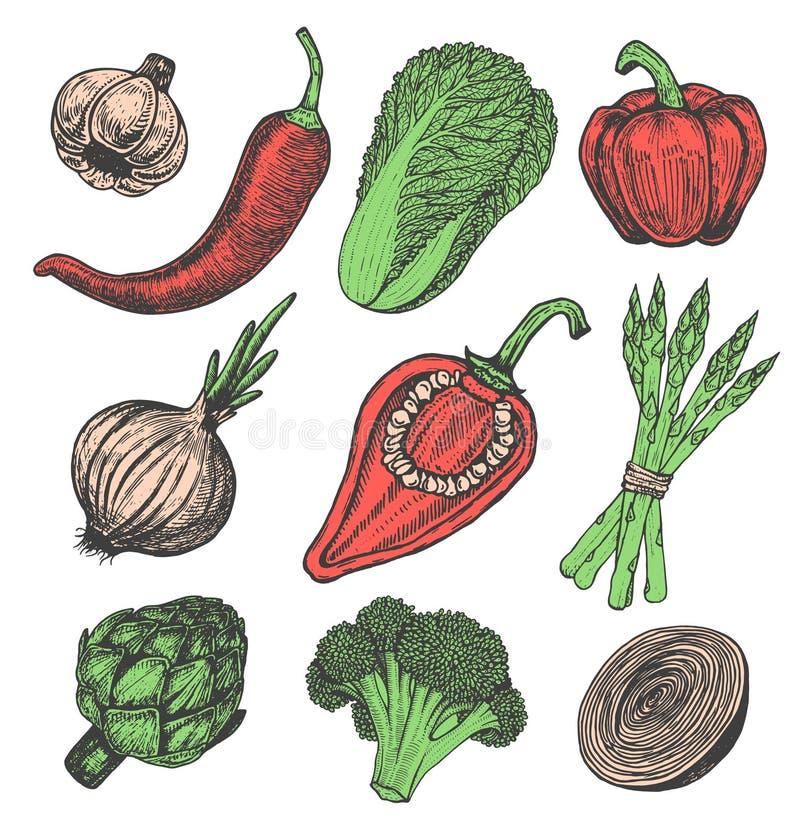 Ajuste elementos tirados mão com os legumes frescos do estilo do esboço Pimentas diferentes ilustração do vetor