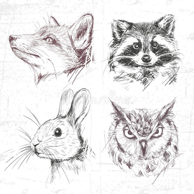 Ajuste Forest Animals ilustração do vetor
