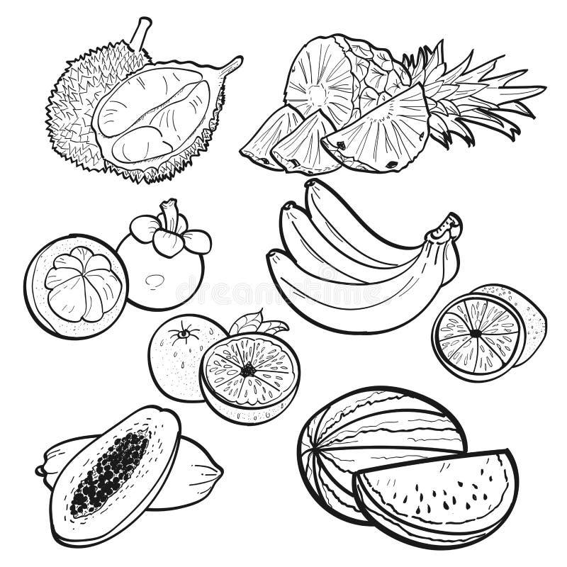 Ajuste a garatuja da coleção de frutos tropicais no fundo branco pela ilustração do vetor imagem de stock