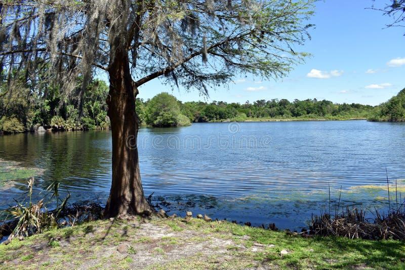 Ajuste id?lico do livro da hist?ria da ?rvore que negligencia um lago perto da universidade de Florida em Gainesville, Florida fotos de stock royalty free