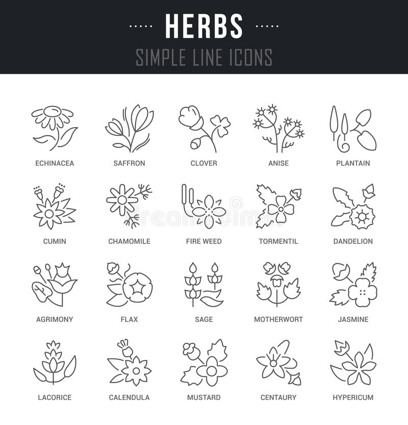Ajuste a linha ícones do vetor de ervas ilustração stock