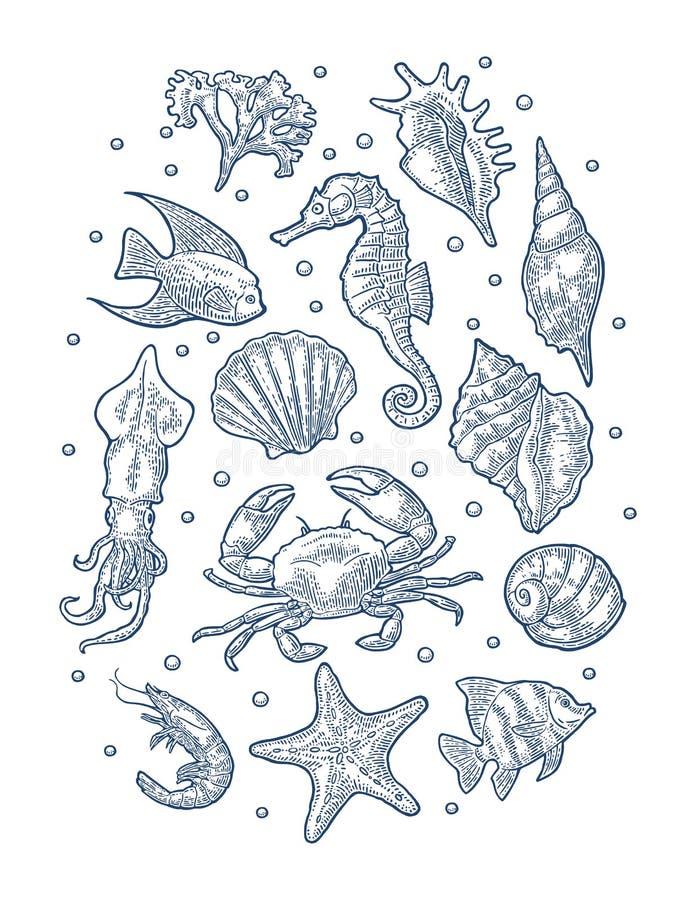 Ajuste o animal de mar Ilustrações de gravação monocromáticas do vintage do vetor isoladas no branco ilustração royalty free