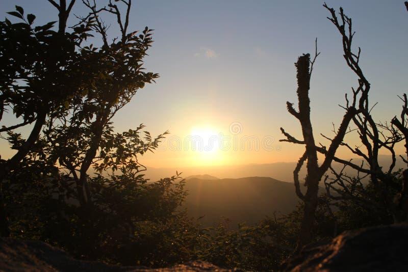 Ajuste Sun que repica através das árvores imagem de stock royalty free