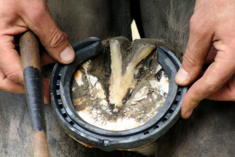 Ajustement de la chaussure de cheval photo libre de droits