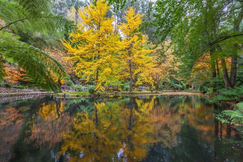 Ajustes tranquilos de una charca y de árboles en caída imágenes de archivo libres de regalías