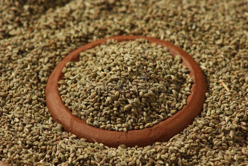 Ajwine oder Karambolagen-Samen ist ein seltenes Gewürz, das für das Würzen benutzt wird lizenzfreie stockbilder
