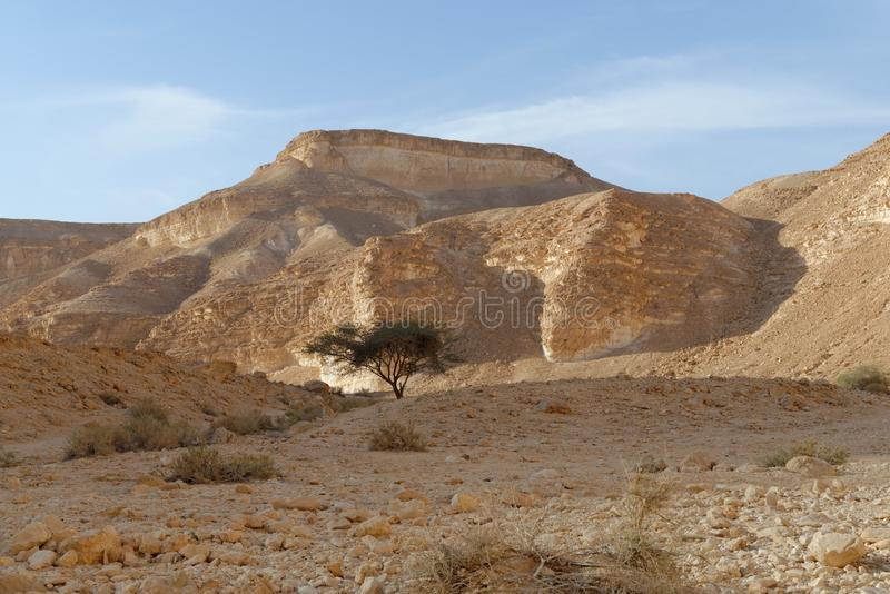 Akacjowy drzewo pod wzgórzem w skalistej pustyni przy zmierzchem obrazy stock