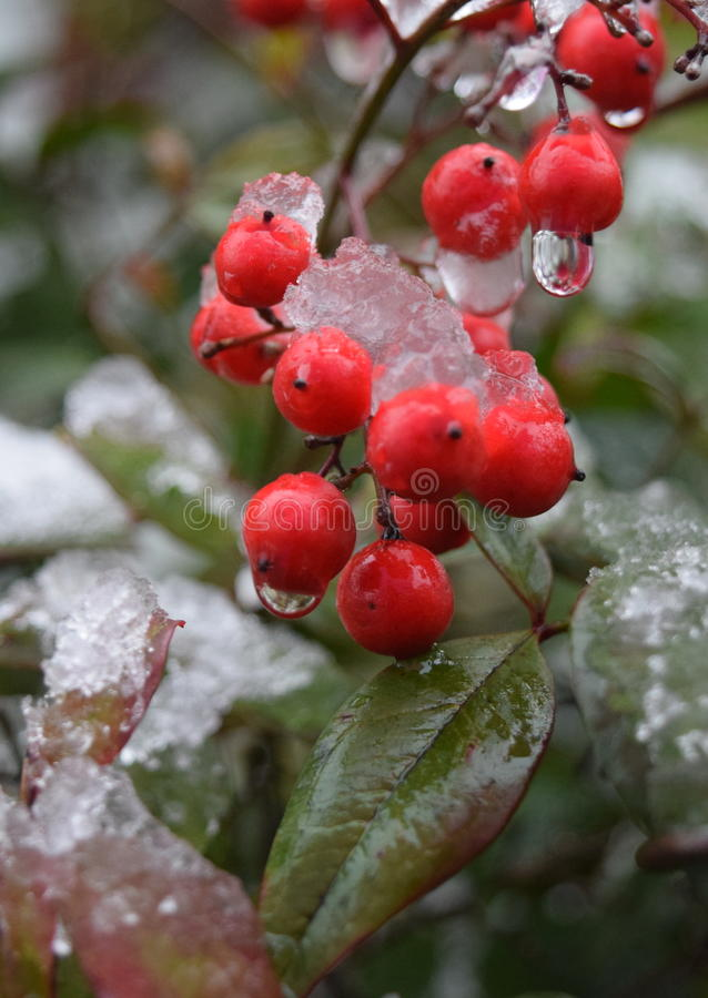 Akaimi e invierno fotos de archivo libres de regalías