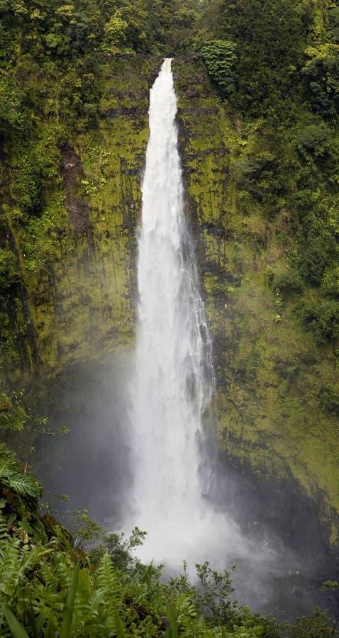 Download Akaka Falls stock image. Image of waterfalls, akaka, hilo - 1199691