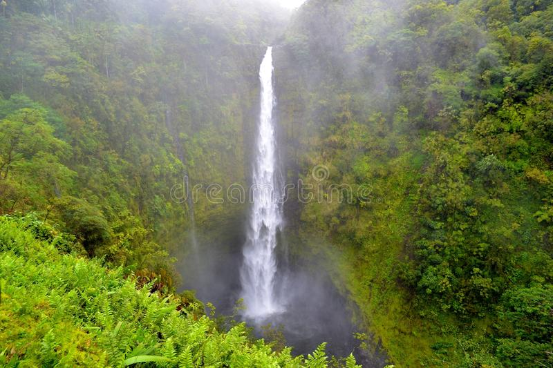 Download Akaka Falls stock photo. Image of cool, scenic, lush - 25511368