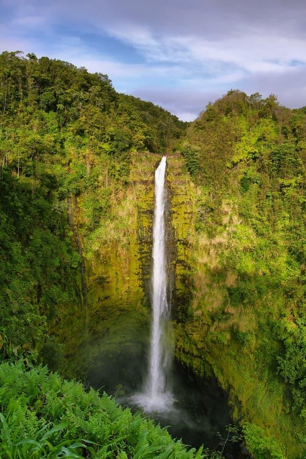 Download Akaka falls stock image. Image of outdoor, flow, lush - 38200093