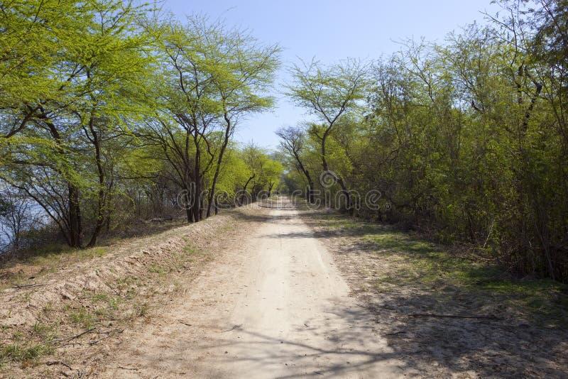 Akazie gezeichnete Straße in harike Sumpfgebieten Indien lizenzfreie stockfotografie