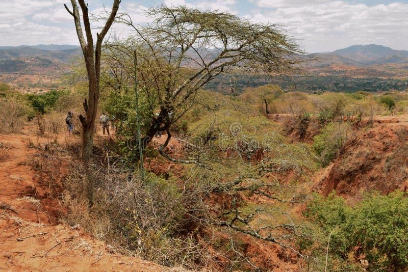 Akazienbäume in den trockenen Landschaften von Kilome-Ebenen, Kenia lizenzfreies stockfoto