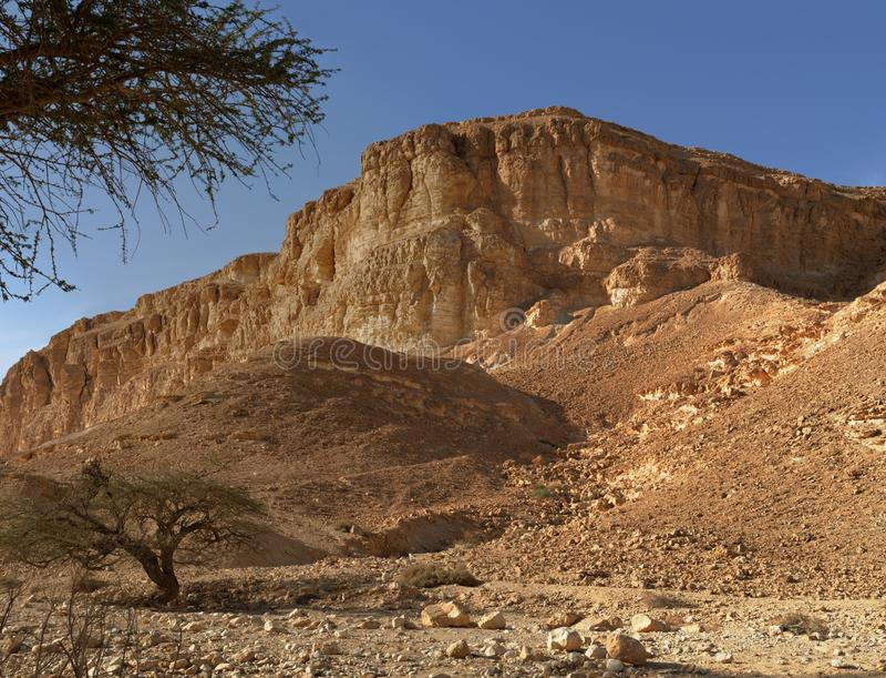 Akazienbäume an der Unterseite des Wüstenhügels bei Sonnenuntergang lizenzfreie stockfotos