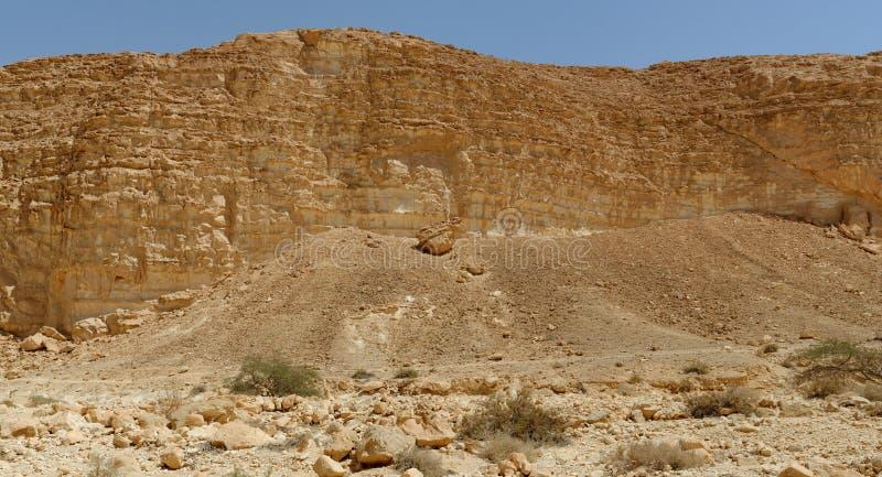 Akazienbäume und -büsche an der Unterseite der felsigen Wand in der Wüste stockfotografie