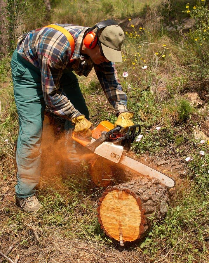 akci lumberjack zdjęcia royalty free