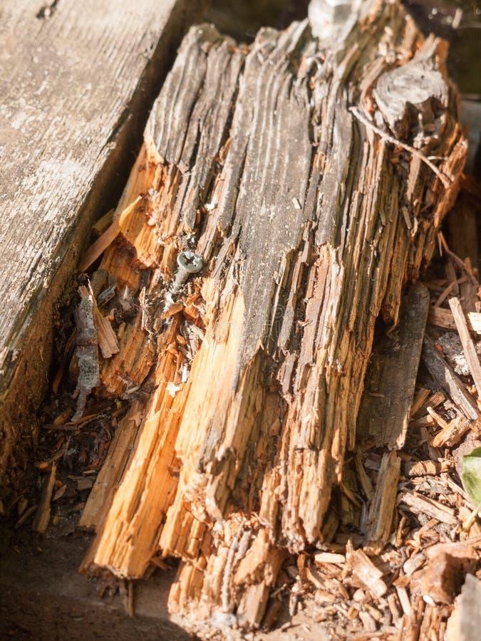 Akcyjna fotografia - łamający kawałek drewniany pontonu zakończenie w górę tekstury uk zdjęcie royalty free