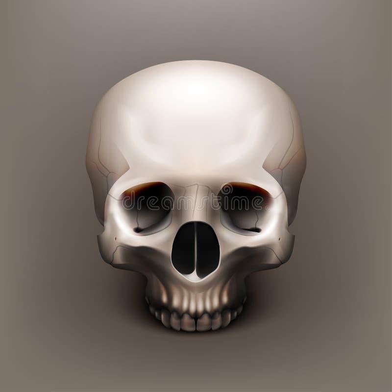 Akcyjnego raster ilustracyjna ludzka czaszka ilustracji