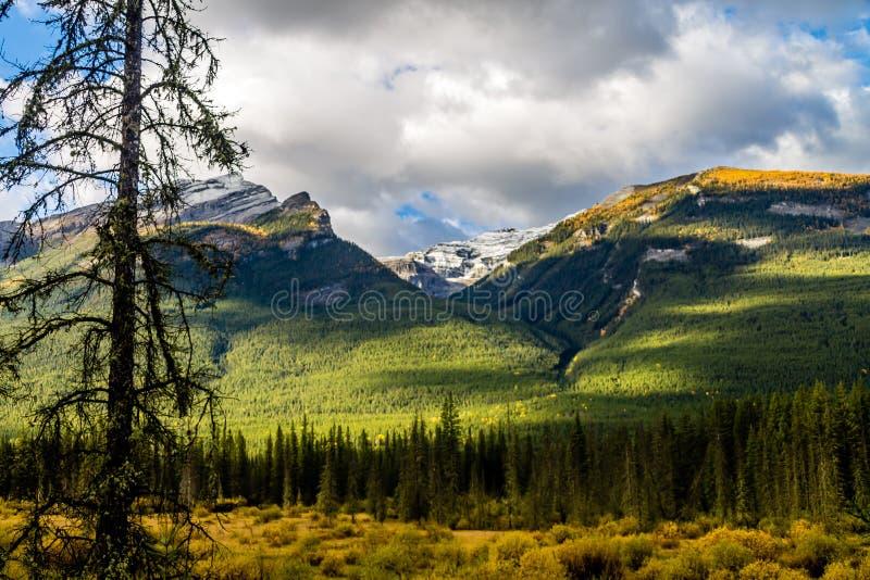 Aken ao longo do parque nacional de Banff da via pública larga e urbanizada do vale da curva, Alberta, Canadá imagem de stock