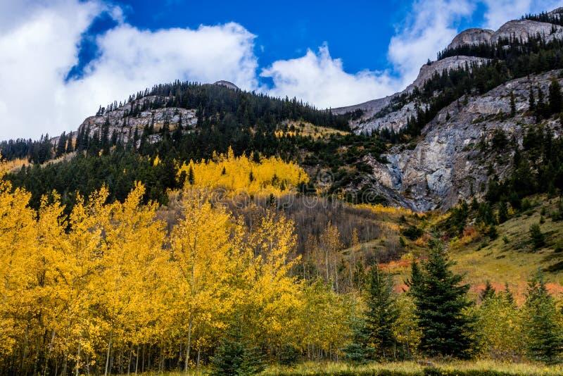 Aken van langs het van het Brede rijweg met mooi aangelegd landschapbanff van de Boogvallei Nationale Park, Alberta, Canada royalty-vrije stock foto's